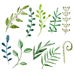 Set watercolor Botanical elements. Green leaves on a white background. A collection of plant elements for design. Hand-drawn elements.