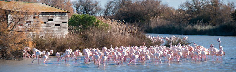 Photo sur Plexiglas Flamingo Flamants roses devant poste d'observation