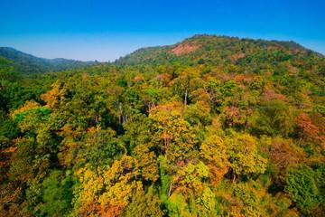 Poster de jardin Parc Naturel Aerial view of autumn forest
