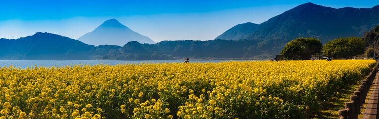 池田湖の菜の花と開聞岳