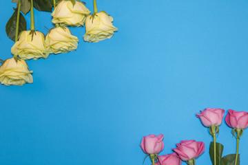 아름다운 장미 프레임