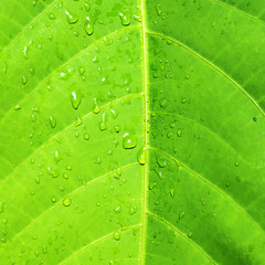 Drops of water on a leaf of a tropical plant