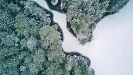 Aerial view of the snow-covered coniferous forest in the winter and a frozen lake.