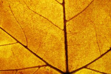 Brown leaf closeup detail background