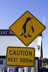 Penguin On Next 500m