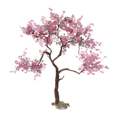 Watercolor pink cherry tree isolated on white. Sakura. Spring. Blossom plant. Hand drawn illustration.
