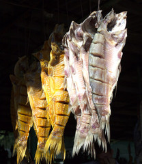 fish on the market