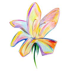 modern flower isolated