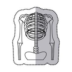 human skeleton icon image, vector illustration design