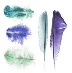 five bright colors feathers isolated on white