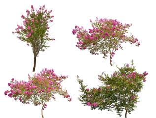 set of four pink blooming trees isolated on white