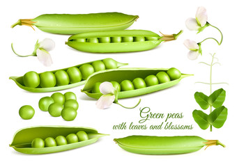 Collection of vector illustrations green peas