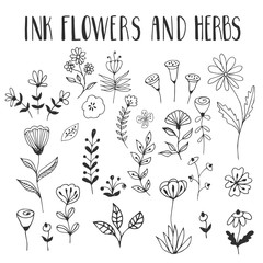 Ink black flowers and herbs. Vector. Isolated.