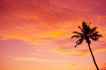 Tropical palm tree silhouette at sunset