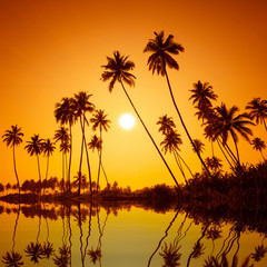 Palm trees silhouettes on tropical beach at summer warm vivid sunset with reflection in calm water