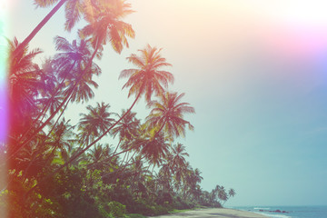 Empty remote tropical beach with exotic coconut palm trees vintage color stylized with film flare light leaks