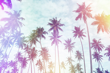 Coconut palm trees on tropical beach vintage nostalgic film color filter stylized and toned with light leaks.
