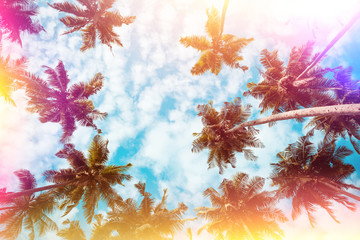 Coconut palm trees on tropical beach vintage nostalgic film color filter stylized and toned