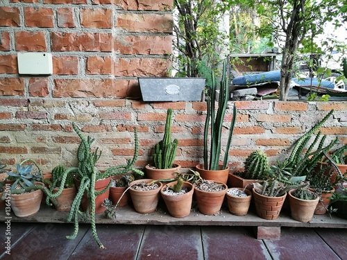 office gardening. Delighful Gardening Cactus Garage Garden At Home With Blur Boken Background  And Office  Gardening Weekend For Office Gardening I
