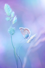 Beautiful light-blue butterfly on blade of grass on a soft lilac blue background.  Air soft romantic  dreamy artistic image spring summer.