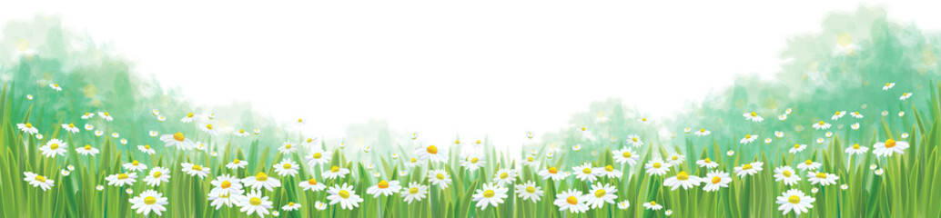Vector summer nature  background, chamomiles field isolated bord