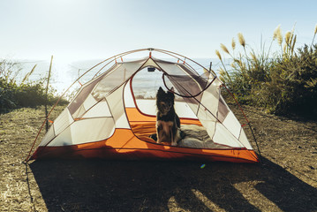 Dog sitting in tent on field