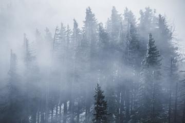 Keuken foto achterwand Bos in mist Misty forest