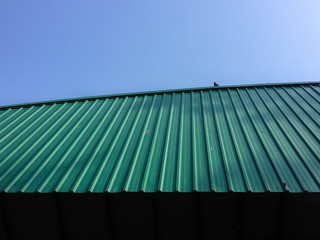 Birds on the roof,uprisen angle view.