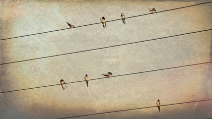 Swallows on Wires   - Grunge  Vintage   Photo