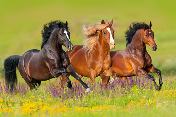Spoed Foto op Canvas Paarden Horses run gallop in flower meadow