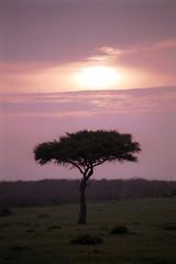Sunrise, Maasai Mara Game Reserve, Kenya