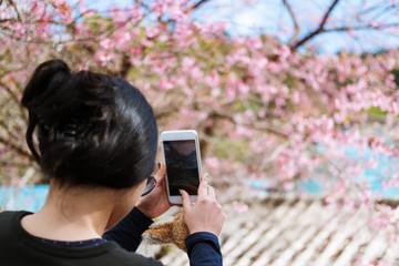 Traveler woman taking a photo of blossom Sakura tree in Japan