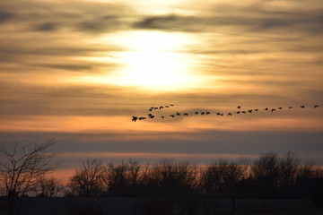 Geese Sunset