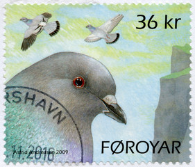 FAROE ISLANDS - 2009: shows Pigeons