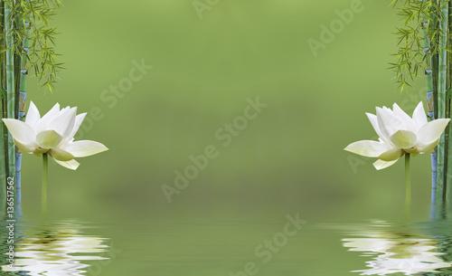 Composition Zen Aquatique Bambou Et Fleur De Lotus Stockfotos Und