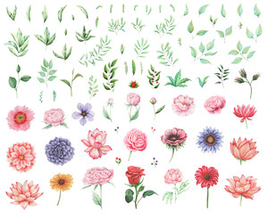 Hand painted watercolor Set of flowers and leaves isolated on white background
