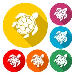 Turtle Icon Flat Graphic Design - Illustration