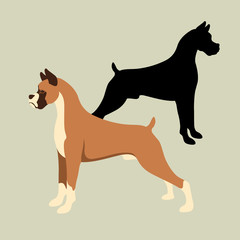boxer dog vector illustration style Flat set silhouette
