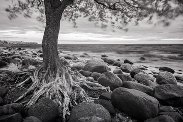 Sea landscape with trees  and stones. Black and white ifrared ph