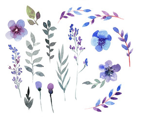 Hand drawing Set of floral elements in blue and purple colors. W