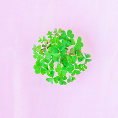 Shamrock piled in a circle. Irish symbol. Ecology concept.