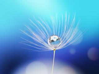 Obraz Krople rosy na mniszku lekarskim na niebieskim tle - fototapety do salonu