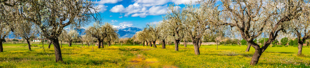 Spanien Landschaft Mallorca Panorama Natur Frühling Mandelbaum Blüte