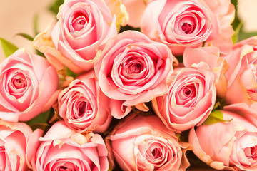 rosa Rosen auf einem Holzhintergrund