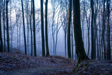 Mysterious autumn woods in fog.