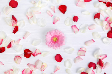 Petals of roses on white painted rustic background. Fresh natural Gerbera flower. Romantic design. Dirty grunge wooden board.