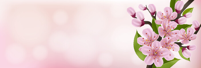 Spring horizontal banner with pink cherry flower and leaf on pink background