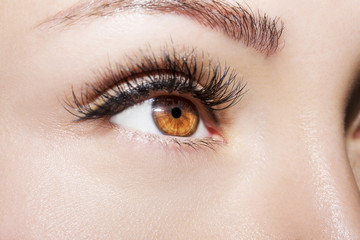 Beautiful Eyes Make up detail, perfect beauty eyebrows