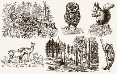 Forest nook. Wild animals. Hand drawn set