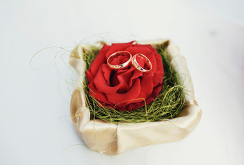 Wedding rings on the beautiful red rose
